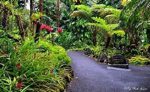 Panoramio photo of orchid garden hawaii tropical for Hilo botanical gardens