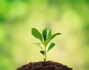 garten und landschaftsbau lã neburg 2048 plants