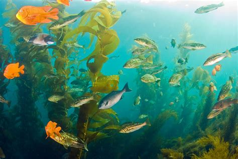 diving catalina islandunderwater photography guide