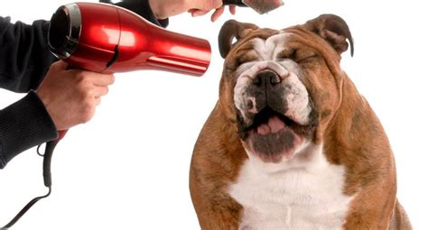 cordless dog clippers reviews  update