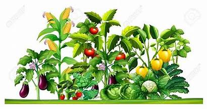 Vegetable Garden Clipart Plants Growing Illustration Drawing
