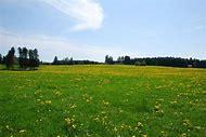 Free Spring Landscape
