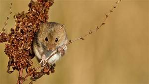 Animal, Mouse, Wallpapers, Hd, Desktop, And, Mobile, Backgrounds