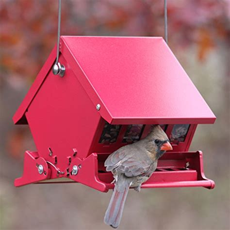 audubon quot mini quot absolute squirrel resistant bird feeder