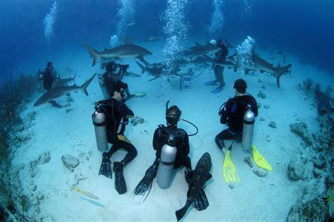 Le Dive - shark diving stuart cove s scuba dive with sharks in