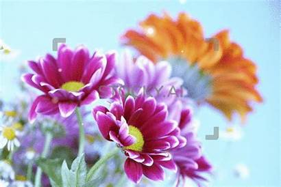 Flowers Colourful Magical Gifs Magic Valentine Stocky