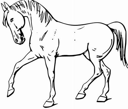 Coloring Horse Walking Pages Purple