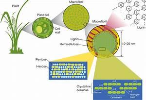 Bio-plastic from Lignin