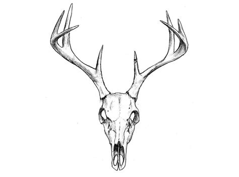 Deer Head Skull Temporary Tattoo