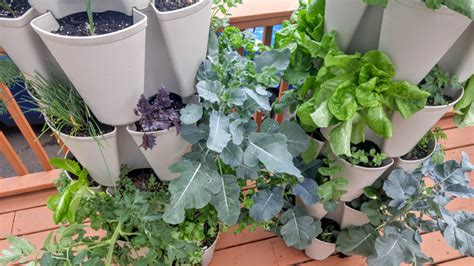 Can You Grow In A Vertical Garden by What To Plant In Your Greenstalk Garden Greenstalk