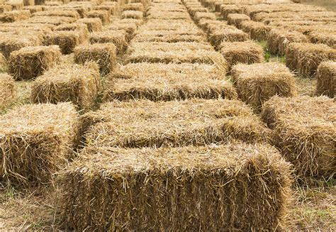 Conventional Hay Bales