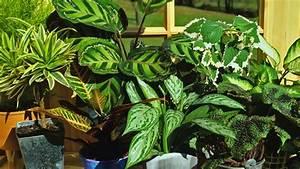 raumklima mit zimmerpflanzen verbessern ndrde With whirlpool garten mit robuste zimmerpflanzen groß