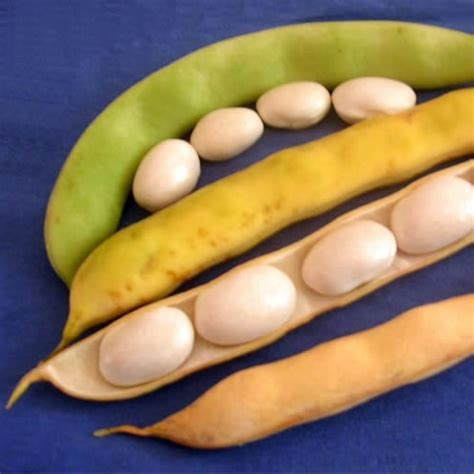 cuisiner les cocos de paimpol le coco de paimpol aop