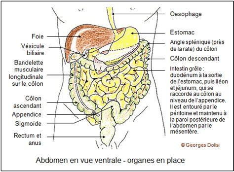 synonyme de femme de chambre biotop terminologie médicale lexique médical