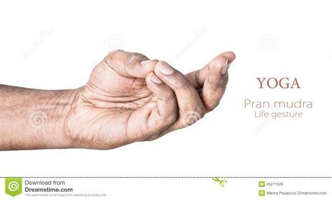 yoga pran mudra royalty  stock images image