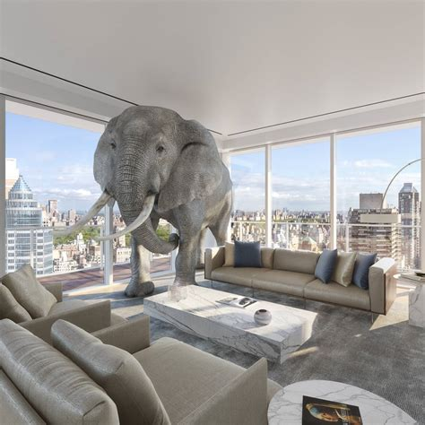 Elephant In The Living Room Definition by Condominium Residences With Terraces In Midtown Nyc