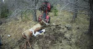 Hunter impales himself on elk post-hunt | goHUNT