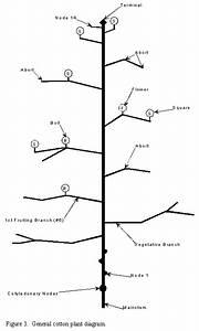 Estimating Fruit Retention  Acis