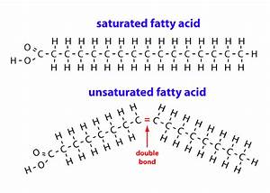 Saturated Fat And Cholesterol