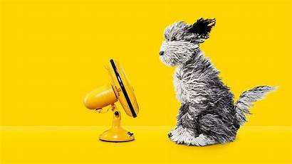 Dog Aa Advert Tukker Creative Tv Fan