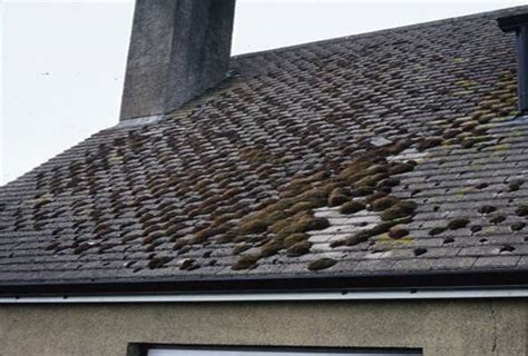 Lichen And Moss Roof Remediation Roof Vents For Metal Red Inn Ann Arbor University Of Michigan South Hidden Fastener Roofing Jacks Sale Installing Steel Contractors Directory Tile Types Modified Bitumen Life Expectancy