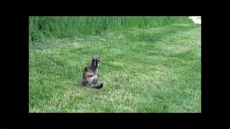 marder und katzen katze cleo und der marder sie starb zwei tage vor ihrem 21 geburtstag am 16 06 2017
