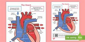 Ks2 Heart Diagram Qr Labelling Activity - Science