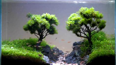 Bonsai Aquascape by Bonsai Aquarıum Aquaturca