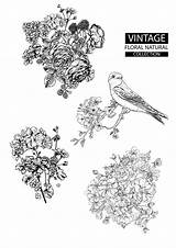 Premium Outline Coloring Floral Collections Vector sketch template