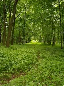Fotos Wald  Wälder
