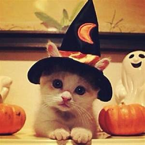 Happy Halloween! | Cute Animals | Pinterest