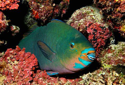 fish parrot australia parrotfish gbr dive rainforest night philippines bird water emaze animals species daintree delargy 2008