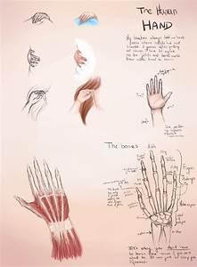 Hands Guide - Bones