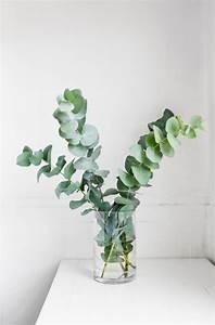 Eucalyptus Plante D Intérieur : les 25 meilleures id es de la cat gorie eucalyptus sur pinterest eucaliptus feuille d ~ Melissatoandfro.com Idées de Décoration