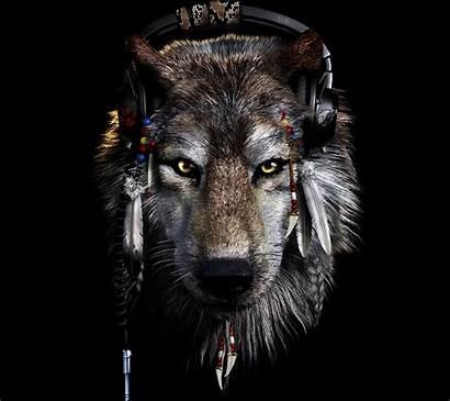 Wolf Wallpapers Backgrounds Pixelstalk
