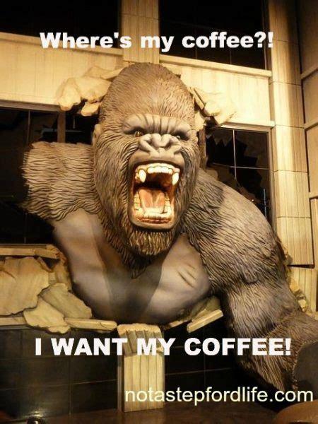 adorable  funny animal coffee memes friday frivolity