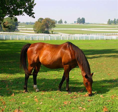 horse kentucky park wikipedia wiki
