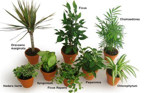 plante pour le bureau quelle plante opter pour bureau espace