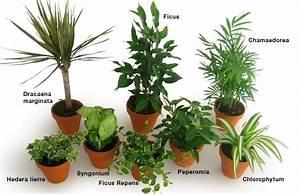 Quelle Plante Opter Pour Son Bureau Espace Zen