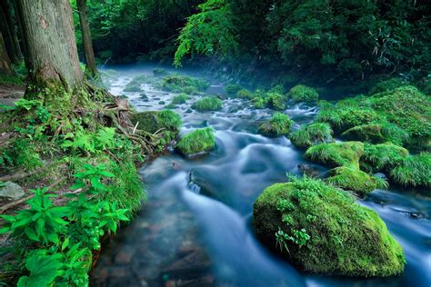 river, Nature, Landscape, Water, Green, Plants Wallpapers ...