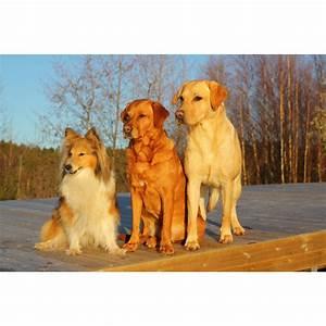 Foto Auf Plexiglas : foto auf plexiglas hunde in verschiedenen gr en erh ltlich ~ Buech-reservation.com Haus und Dekorationen