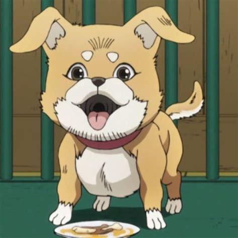 Welcome to see the jojo! The History of Jojo Memes: Dog Cruelty   Anime Amino