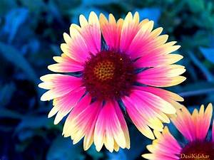 DesiKalakar: Pretty Flowers