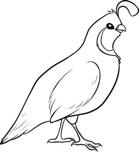 Coloring Quail by Valley Quail Coloring Page Color
