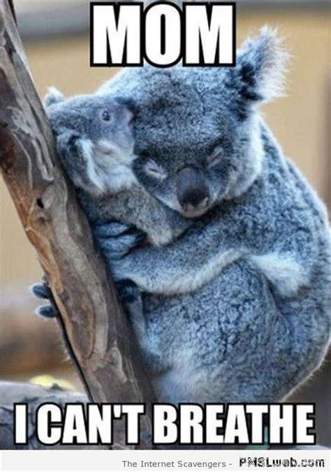 Koala Meme - 52 best koala bears images on pinterest koala bears koalas and wild animals