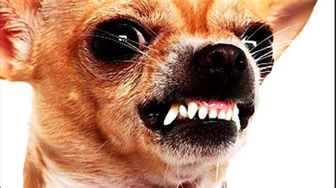 Mad Doggomp4 Youtube