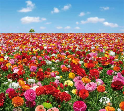 wallpaper design for home interiors evolution flowers field wall mural 1183 by atlas