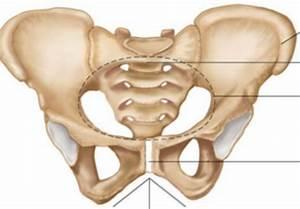Bone Images