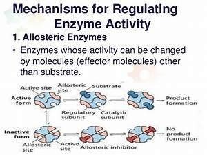 Mechanisms For Regulating Enzyme Activity1  Allosteric