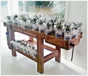 Bomboniere per matrimonio, bomboniere bonsai, bomboniere solidali, regali aziendali #